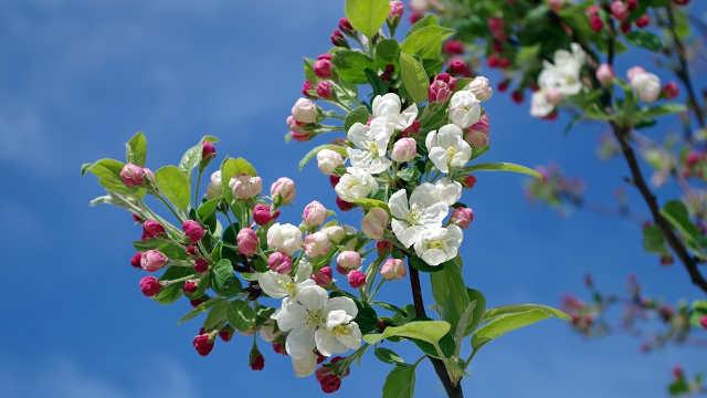 5 preparata koje ovog proleća morate isprobati u vašim voćnjacima