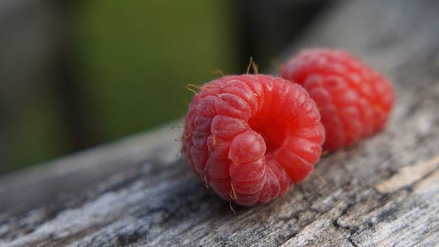 Institut za voćarstvo: Organske sadnice maline od naredne sezone