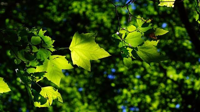 Lučani ozeleneli: Osušena stabla zameniće mlade šume