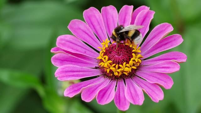 7 najlepših prolećnih cvetova za vašu baštu