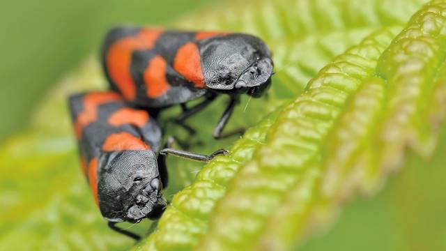 Ovih 7 insekata uništavaju štetočine u vašoj bašti