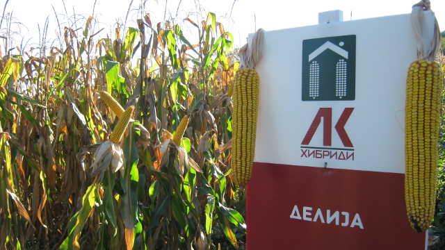 Za pune prikolice - LK hibridi kukuruza