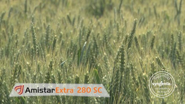 Amistar Extra 280 SC – jer ne pravi greške