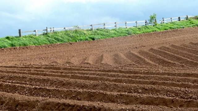Uskoro licitacija poljoprivrednog zemljišta u Novom Sadu