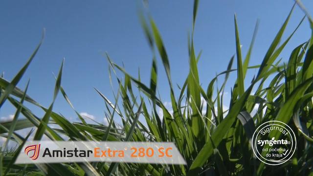Amistar extra – odgovor na sve izazove u pšenici