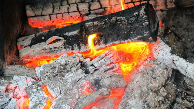 Za jake i mesnate plodove zaštitite biljke pepelom od drveta