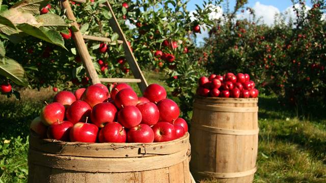 Podsticaji za podizanje zasada voćaka, hmelja i vinove loze