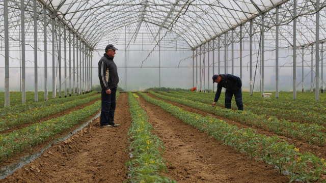 Savremeni plastenici - nove fabrike hrane
