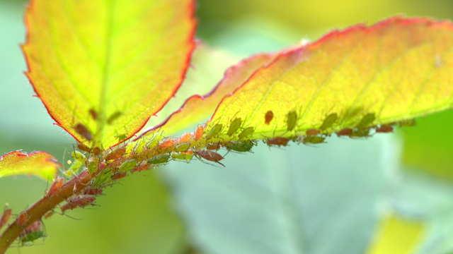 Saznajte sve o biljnim vašima i tako zaštitite biljke na vreme