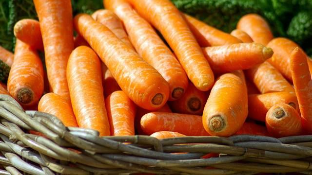 Kvalitet šargarepe iz Begeča osvojio svet