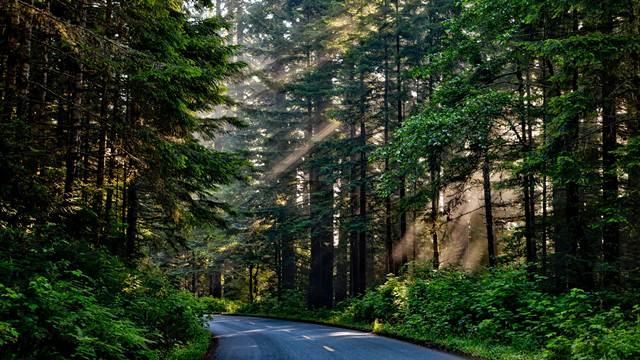 Budimo odgovorni za prvomajske praznike - Sačuvajmo naše šume zajedno