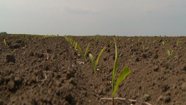 Ovo je kombinacija preparata za suzbijanje korova u kukuruzu sa kojom nema rizika