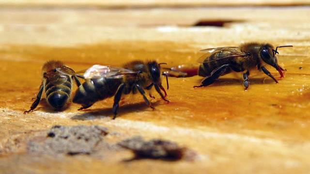 Ovo je najskuplji pčelinji proizvod