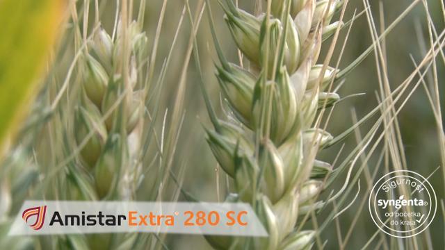 Sačuvajte potencijal vaše pšenice uz Amistar extra