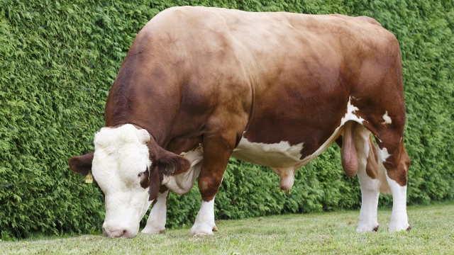 Revolucija u govedarstvu - genomska selekcija