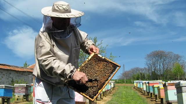 Savet iskusnog pčelara: Spremite se za bagremovu pašu