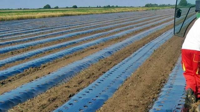 Upotreba folije - osnova za dobar uzgoj i visok prinos