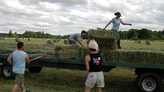 Mladi poljoprivrednici, sada možete da konkurište za podsticaje!