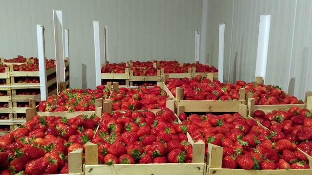 Koja je idealna temperatura za čuvanje plodova jagode?