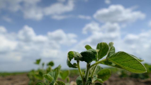 Uz ova 2 preparata vaša soja će biti jaka, zdrava i otporna