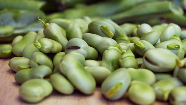 Bob – hranljiv, zdrav i lak za gajenje