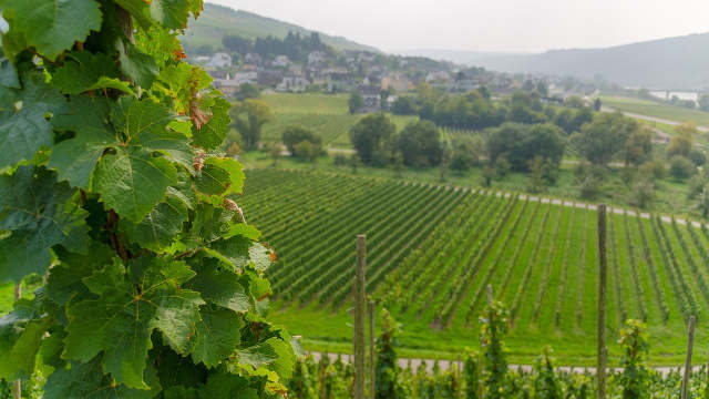 Svetski eksperti oduševljeni vinskim regijama u Srbiji