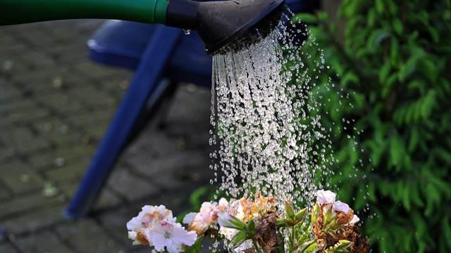 10 zlatnih pravila za zalivanje biljaka tokom letnjih meseci