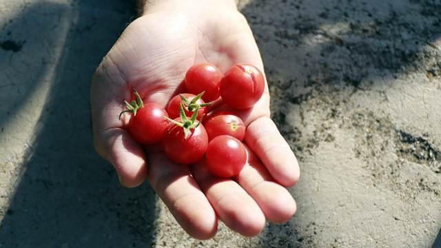 Povrće i voće iz uvoza obara cene domaćem