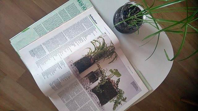 Hidrokultura – jednostavno i isplativo uzgajanje biljaka