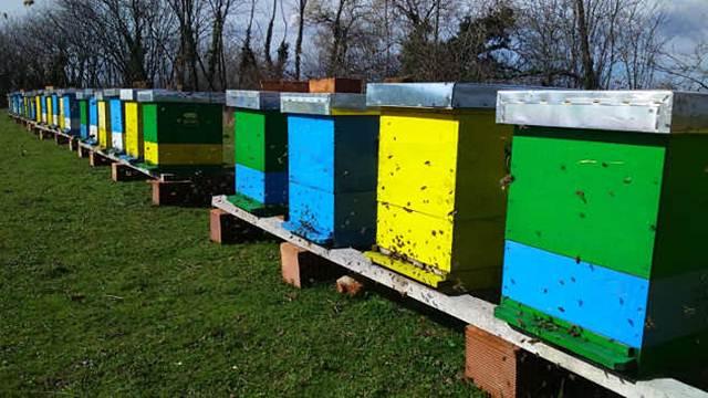 Zbog visoke cene meda lopovi kradu košnice