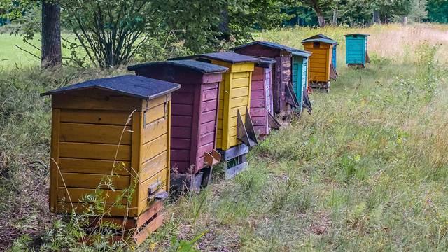 Pčelari na mukama: Medvedi uništavaju košnice i jedu med