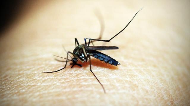 7 biljaka koje morate imati u bašti jer odbijaju komarce