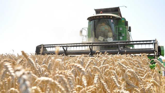 Proizvođači nezadovoljni cenom pšenice - traže 19,80 dinara