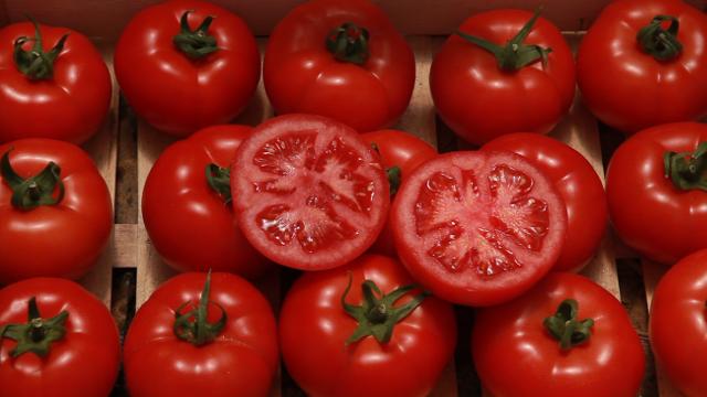 Ovo je hibrid paradajza bez mane