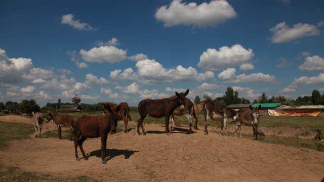 Upoznajte sve lepote Specijalnog rezervata prirode Zasavica