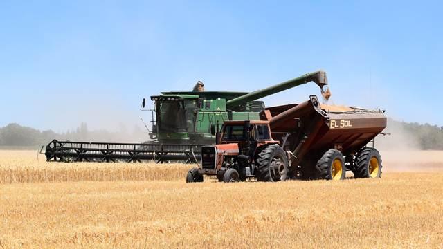 Pećinci: Požnjeveno 1.700 hektara pšenice