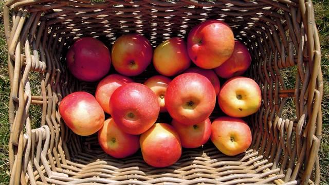 Raste izvoz jabuka i mesa u Rusiju