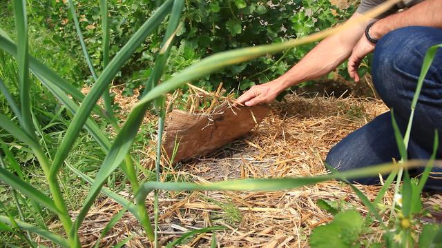 Malčiranje – najbolji saveznik žbunastih biljnih vrsta