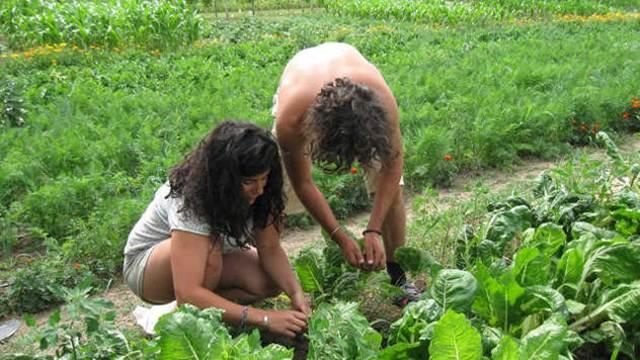 Uvedena nova mera za žene u poljoprivredi i mlađe od 40 godina