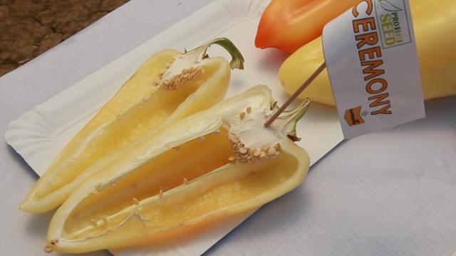 """Zašto su """"Nunhems"""" hibridi izbor dobrih povrtara iz celog sveta"""