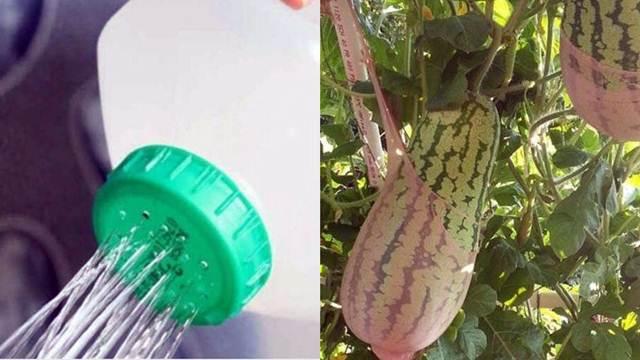 9 neobičnih trikova koji će vam olakšati poslove u bašti