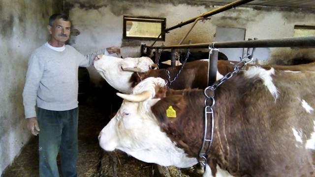 Mlečno govedarstvo - za neke težak posao, a nekome sigurna zarada