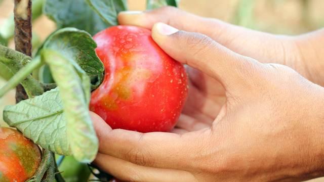 Podsticaji za biljnu proizvodnju i opremanje stočarskih farmi