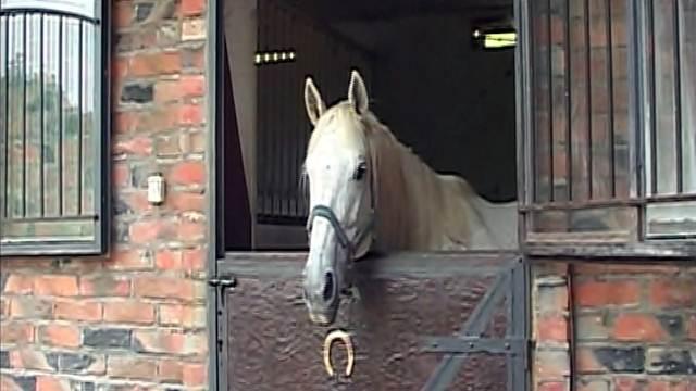 Uzgoj trkačkih konja - i ljubav i bizinis