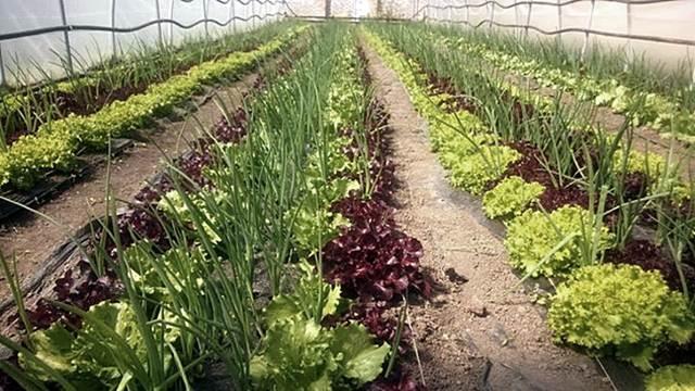 Mešanjem različitih sredstava za zaštitu bilja smanjuju se troškovi