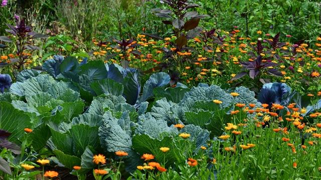 Udružena sadnja: Koje cveće i povrće treba saditi zajedno