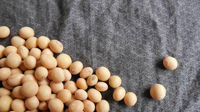 Koje uslove mora da zadovoljava soja za industrijsku preradu?