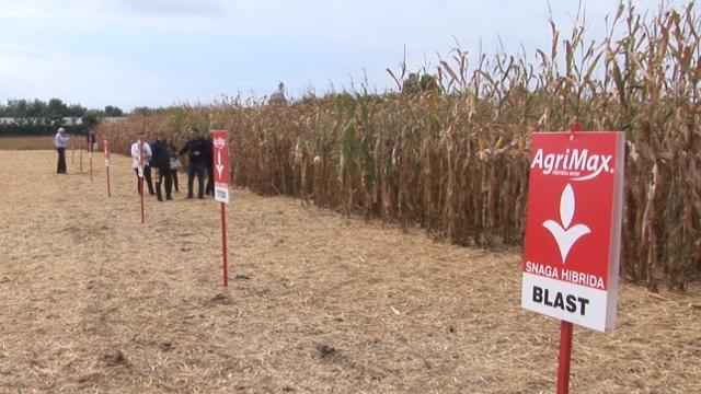 Hibridi kukuruza koji se nalaze na listi 10 najprodavanijih u Srbiji