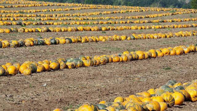 Koliko država štiti poljočuvare