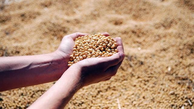 Nedimović: Kvalitetne soje nema dovoljno za domaće potrebe
